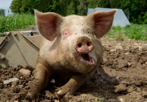 Саратовская область Зеленый патруль Жители Владимирской области против создания свинокомплекса под Суздалем